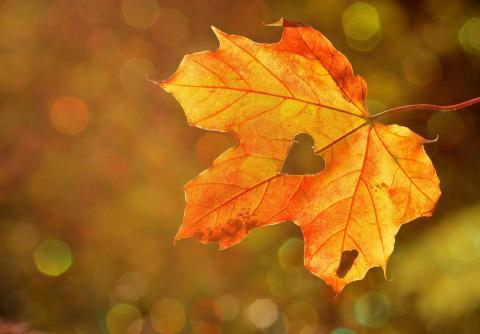 «Осенняя сказка»
